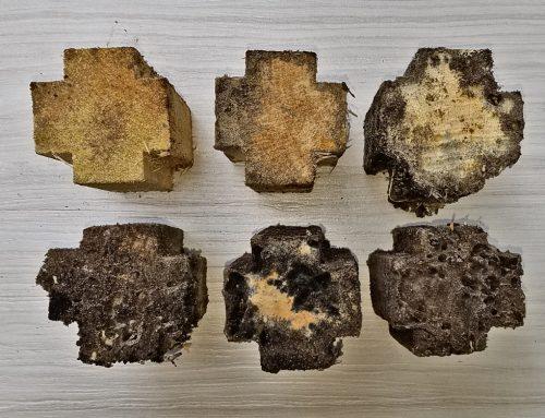 Subterranean Termite Bait Study–Update
